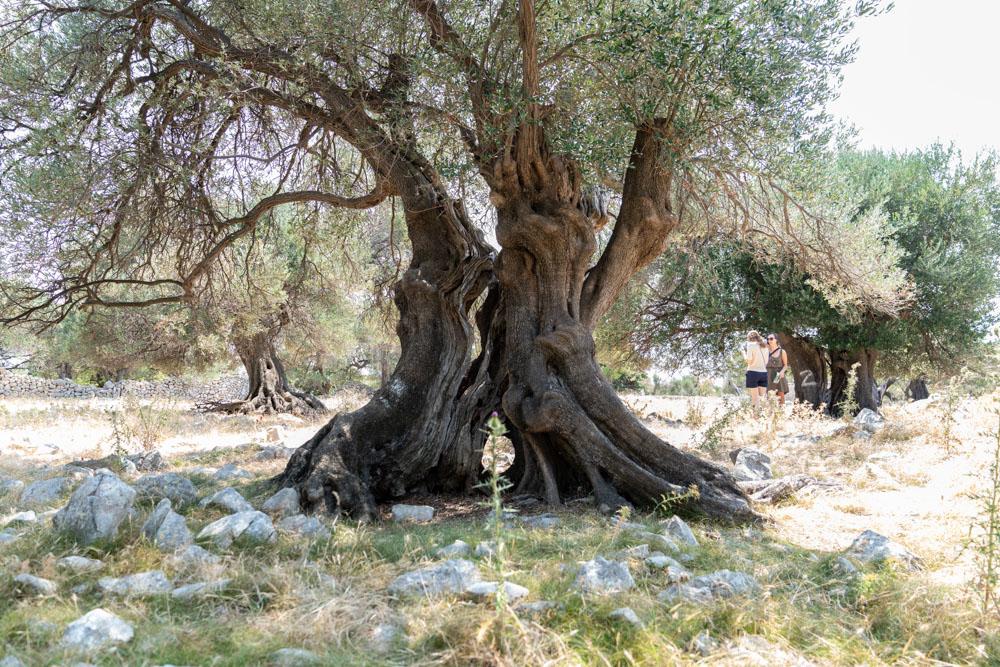 Baum Ventus Travel